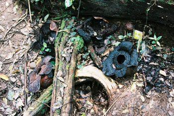 Borneo_2006_051621