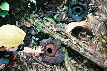 Borneo_2006_051622