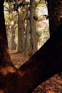 Leica_summicron50mm_04